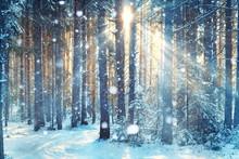 Frosty Winter Landscape In Sno...
