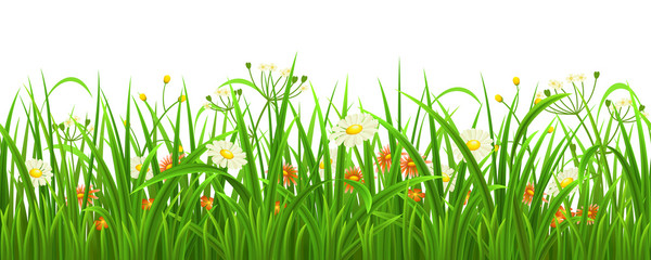 Naklejka Do przedszkola Seamless green grass with flowers, vector illustration