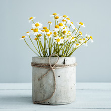 Bouquet Of Daisy-chamomile Flowers In The Morning