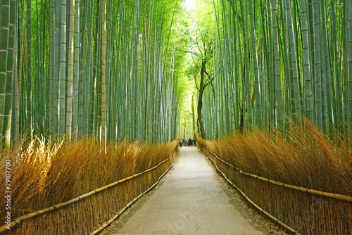 Tuinposter Bamboo bamboo groove