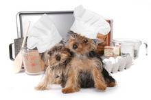 Cute Yorkshire Terriers Chef W...