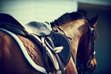 Fototapeta Konie - Saddle with stirrups