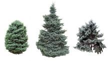 Spruce And Fir Blue.
