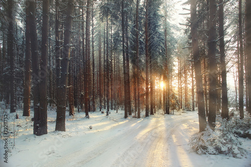 Poster de jardin Taupe frosty winter landscape in snowy forest