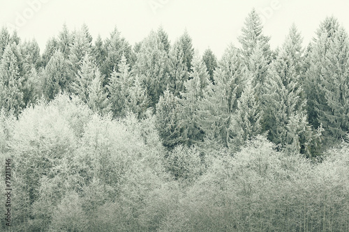 Poster Taupe white wood covered with frost frosty landscape