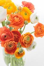 Warm Colors Ranunculus Flowers Bunch In A Vase