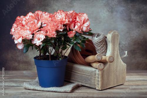 Papiers peints Azalea azalea in pot and garden tools
