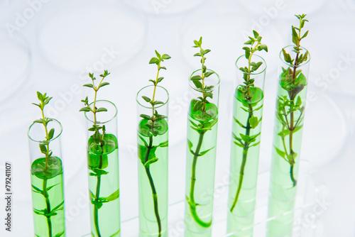 Fotografía  Las plantas modificadas genéticamente