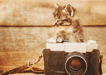 Cute Kitten With Old Photo Cam...