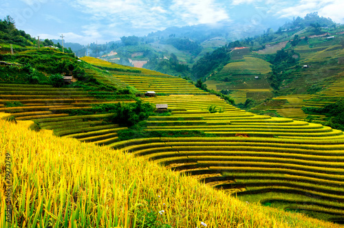Aluminium Prints Rice fields Rice fields on terraced of Mu Cang Chai, YenBai, Vietnam