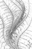 Leaf Overlay Texture - 79276574