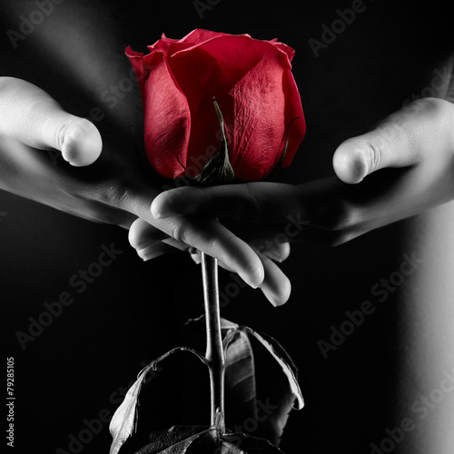 Silhouette of nude woman with red rose isolated on black - 79285105