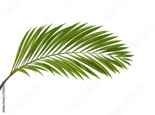 Photo tropical plant