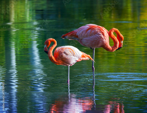 Foto op Aluminium Flamingo Two pink flamingos standing in the water. Stylized photo