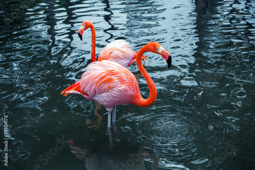 Garden Poster Flamingo Two pink flamingos in water. Vintage stylized photo