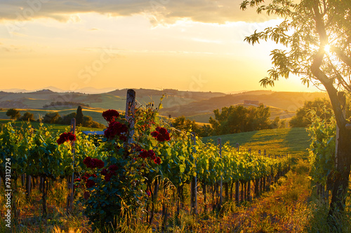 Spoed Foto op Canvas Wijngaard Tuscany vineyards in fall