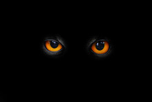 Evil Eyes In The Darkness.