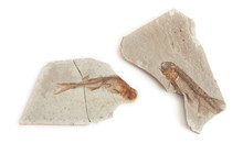 Two Fishes Fossil