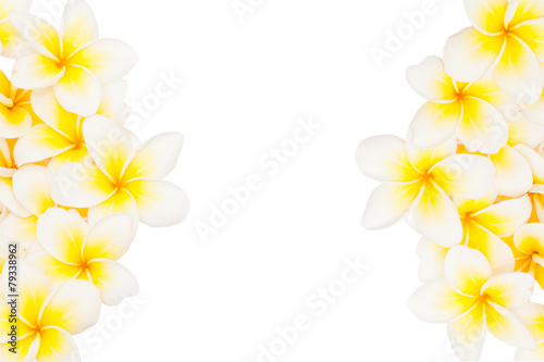 Tuinposter Frangipani Plumeria flower isolated on the white background