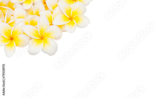 In de dag Frangipani Plumeria flower isolated on the white background
