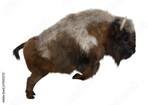 American Bison Fototapete