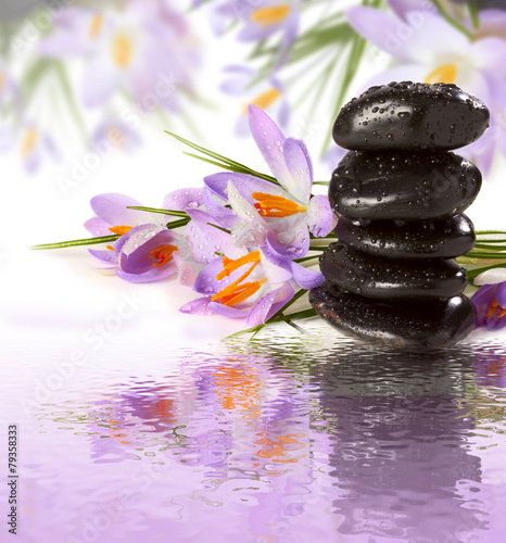 Fototapety, obrazy: purple flowers black stones on water