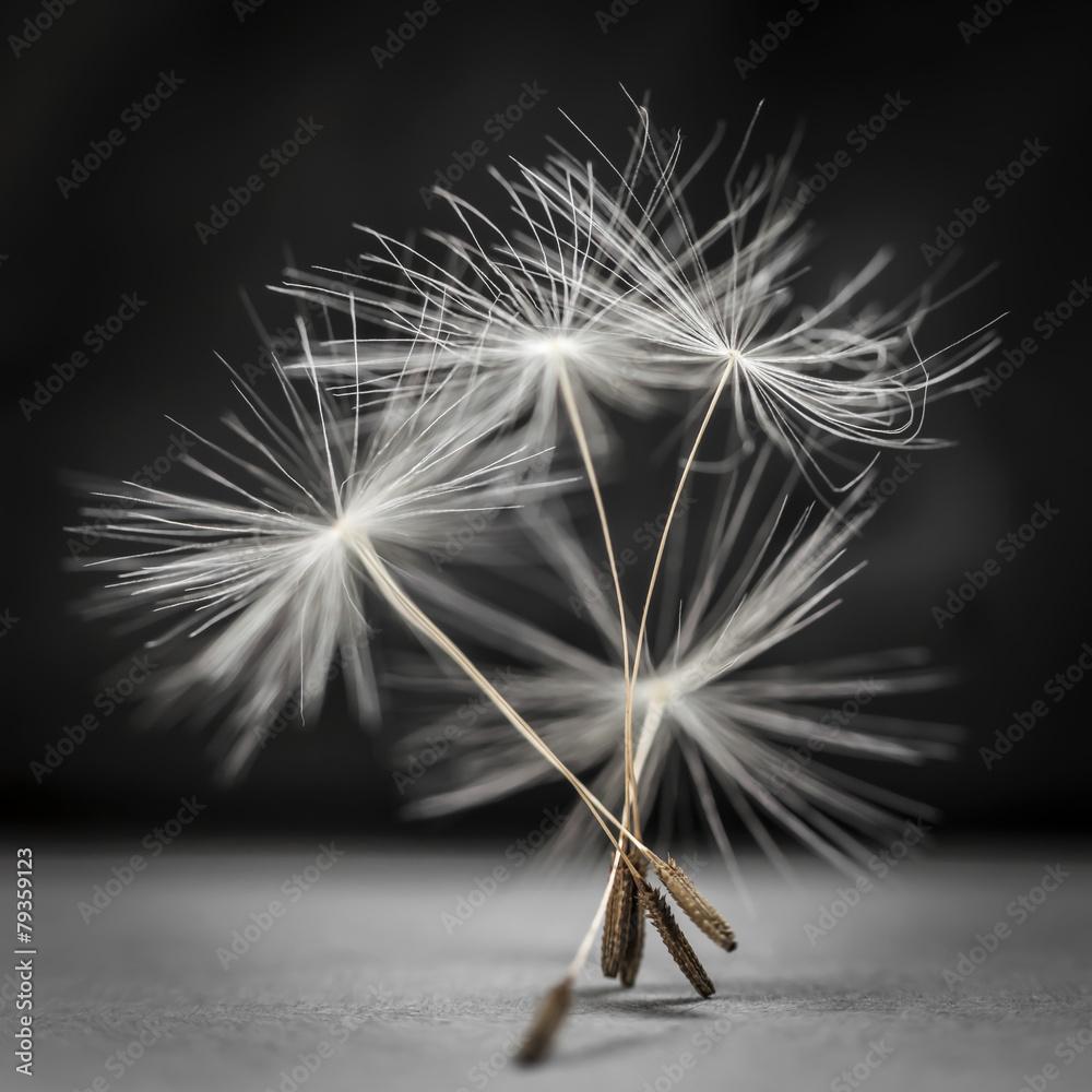 Fototapeta Dandelion seeds standing