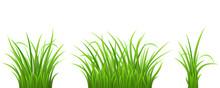Green Grass Set On White, Vector Illustration