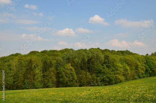 Hügellandschaft mit Löwenzahnwiese © alisseja