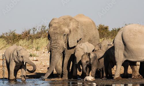 Canvas Prints Elephant Group of Elephants at the Waterhole, Etosha, Namibia