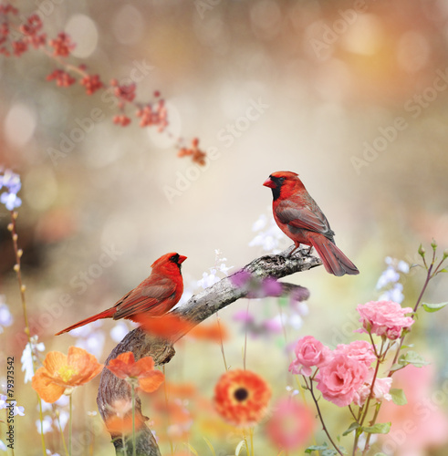 Deurstickers Vogel Northern Cardinals