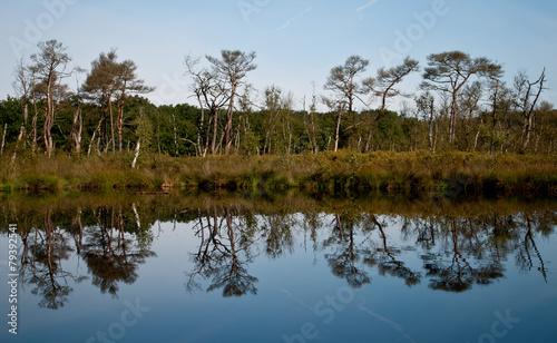 Fototapeten Natur Bomen in bosmeer