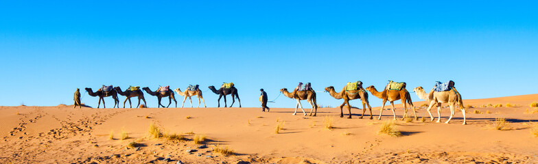 Fototapeta Camel caravan on the Sahara desert in Morocco