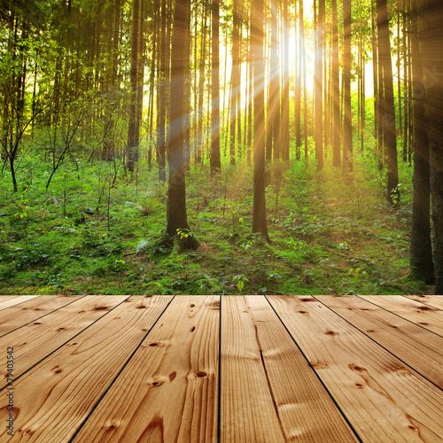Tuinposter Weg in bos Sonne im Wald