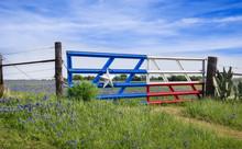 Texas Bluebonnets Along A Fenc...