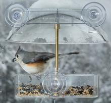 Tufted Titmouse In Window Bird...
