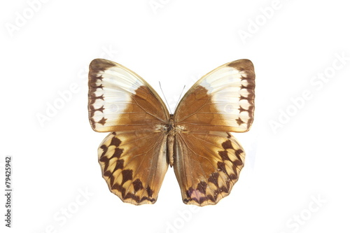 Deurstickers Vlinder colorful butterfly isolated on white