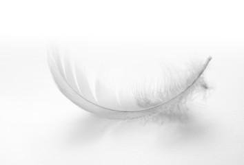 white swan feather