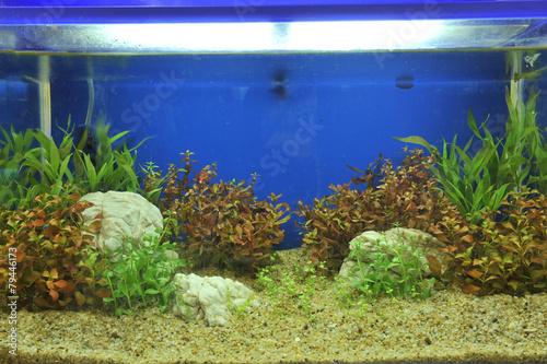 Tuinposter Koraalriffen aquarium