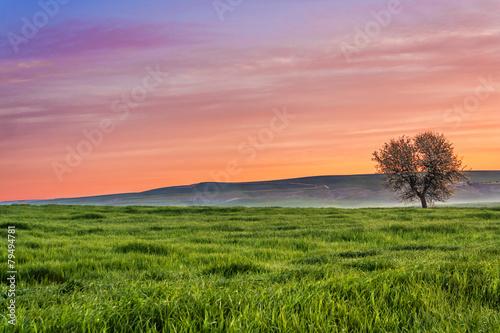 Tra Puglia e Basilicata: paesaggio agreste primaverile.ITALIA Slika na platnu