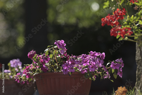 Vaso Di Fiori Viola Buy This Stock Photo And Explore