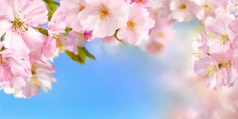Panel Szklany Podświetlane Drzewa Kirschblüten Hintergrund mit Himmel