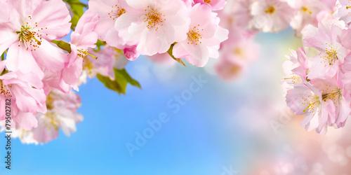 Kirschblüten Hintergrund mit Himmel
