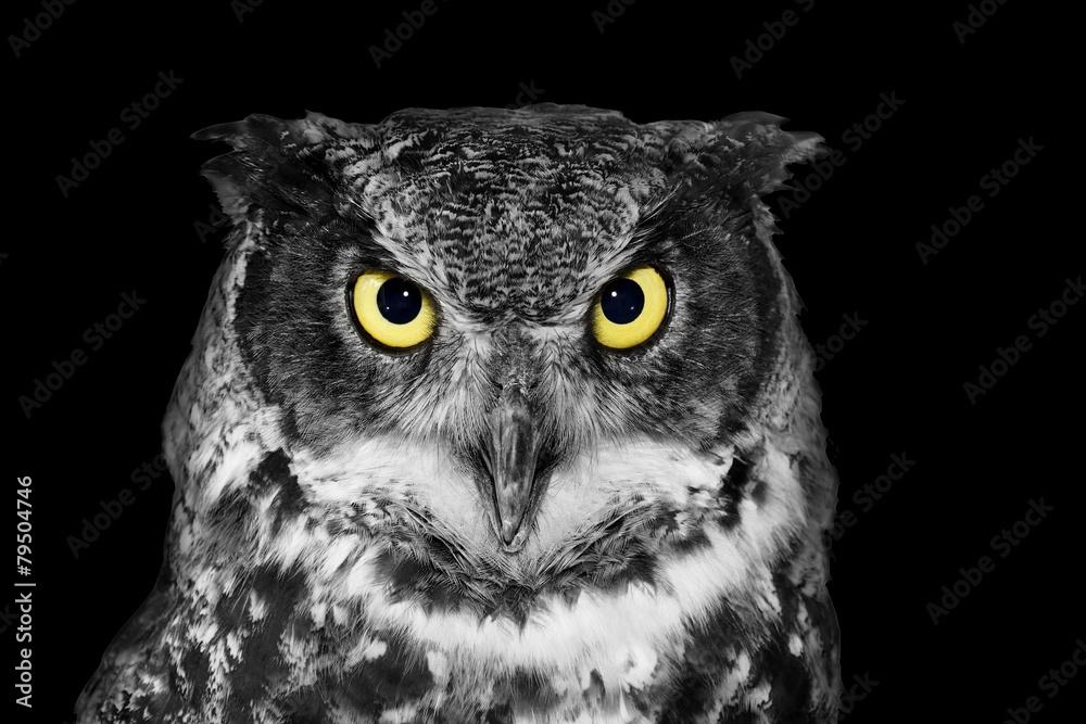Fototapety, obrazy: Great Horned owl in BW