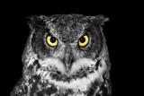Fototapeta Zwierzęta - Great Horned owl in BW