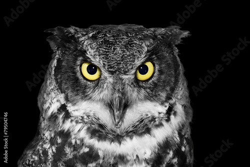 In de dag Uil Great Horned owl in BW
