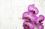 Fototapeta Fototapety do przedpokoju i na korytarz, nowoczesne - Orchids