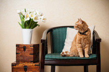 Home Interior, Cat