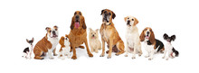 Group Of Various Size Dogs