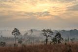 Fototapeta Sawanna - Tung Salang Luang, The Savanna of Thailand. This Savanna is the